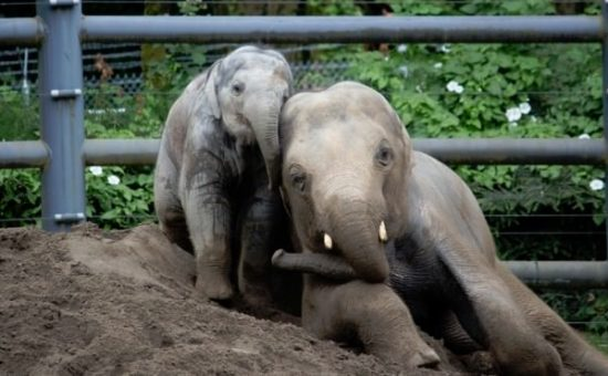 A Look Back at the Life of Lily the Elephant