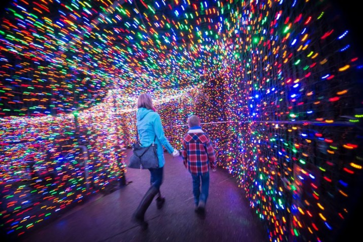 Zoo Lights Illuminate Darkness with 1.6 million lights