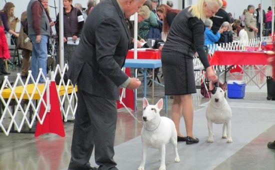 2019 Rose City Classic Dog Show Has Tails Wagging