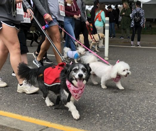 Oregon Humane Society Launches Free Registration for Doggie Dash